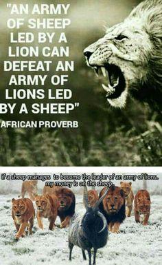 Must be one badass sheep.