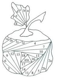 free iris folding patterns - Google Search