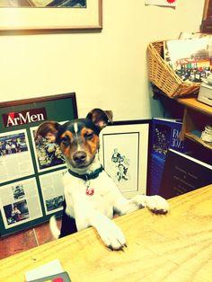 Meet Jack! Boston Terrier, Charity, Adoption, Meet, Dogs, Animals, Foster Care Adoption, Boston Terriers, Animaux