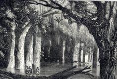 Olímpia Reis Resque: Vocabulário amazônico: Igapó No Blog! Iniciando a seção Vocabulário amazônico com o termo Igapó. E com o  relato do Dr. Jacques Huber (1867-1914) sobre a vegetação que habita um igapó.