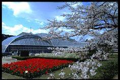 京都観光Navi:京都府立植物園