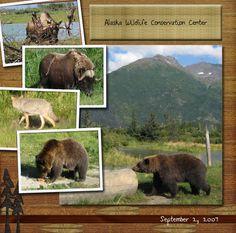 wildlife scrapbook layouts   Alaskan Wildlife Conservation Center - Digital Scrapbook Place Gallery