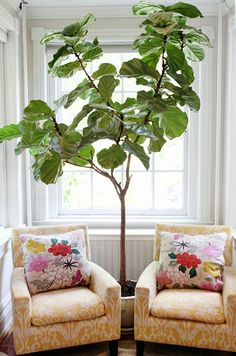 Two accent chairs and a potted plant make for a small sitting area | Kathryn Ivey