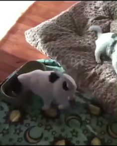 MY favorite little video snippet of ALL time --- Happy Puppy! Funny Animal Videos, Cute Funny Animals, Funny Animal Pictures, Cute Baby Animals, Animals And Pets, Funny Babies, Funny Dogs, Cute Babies, Cute Puppies