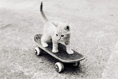 Skateboarding kitty!