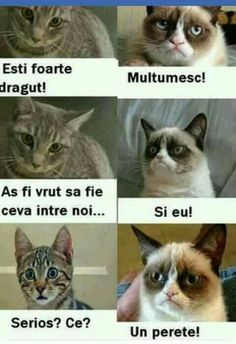 Funny Jockes, Crazy Funny Memes, Funny Texts, Funny Images, Funny Photos, Animals And Pets, Funny Animals, Funny Advertising, Life Humor