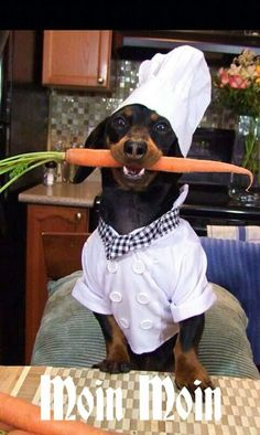 Fruits and vegetables can make excellent healthy treats for your dog. They are full of vitamins and minerals, and they cost less and are healthier than processed dog treats. These fruits and veggies top the list of healthiest treats for dogs. Dachshund Funny, Dachshund Art, Long Haired Dachshund, Dachshund Gifts, Dachshund Puppies, Funny Dogs, Cute Dogs, Weiner Dogs, Dapple Dachshund