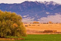 Harvest Time - Paradise Valley, MontanaAgriculture