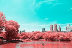 Infrared NYC: fotografias do Central Park por Paolo Pettigiani;