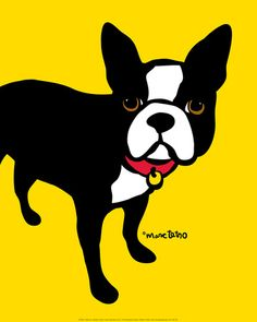 Boston terrier , Posters and Prints at Art.com