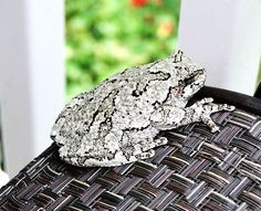 14 best gray tree frogs images on Pinterest | Gray tree ...