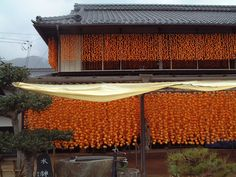 Persimmons hanging- Ina Japan