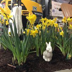 Spring has arrived at the Minnesota indoor lawn and garden show. #freshflowersmakemehappy #springawakening #oldlakegeorge