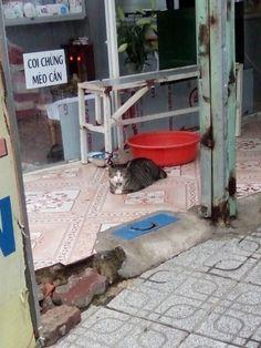 Coi chừng mèo cắn