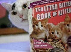 ooppssyy - itteh bitteh book of kitteh