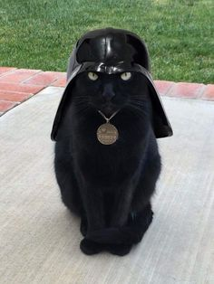 PsBattle: Darth Vader disguised as cat
