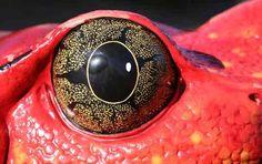 Google Image Result for http://www.animals-zone.com/wp-content/uploads/2010/05/Animal-Eyes-15.jpg