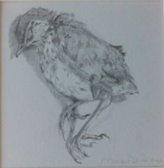 A new dead bird in my collection. Drawing by Monique Duran.
