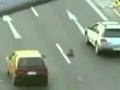 hero dog rescues injured dog..heartwarming story! (with a happy ending! :)