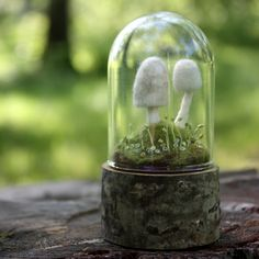 ~ lil fish studios tiny toadstools - needle-felted fiber art terrarium