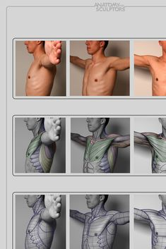anatomy 4 sculptors