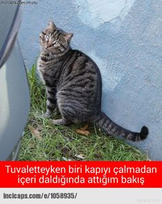 attığım bakış - - incicaps Dog Pin, Cute Cats And Dogs, Funny Pictures, Jokes, Humor, Comics, Animals, Life, Check