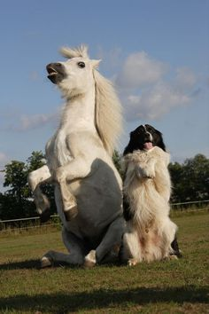 Dog and horse - besties for life