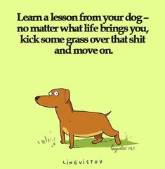 24 Life Lessons Everyone Should Learn 123 Fun Animal Comics By Russian Artist Duo Lingvistov Funny Pictures Of The Day - 50 Pics you make mistakes dont worry about people Best life Quotes to live by . Top 20 Quotes Quotes Of The Day - 16 Pi. Funny Shit, Funny Memes, Hilarious, Funny Sarcastic, The Words, Dog Quotes, Life Quotes, Shark Quotes, Wisdom Quotes