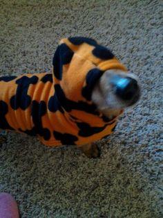 Tyson's Halloween costume