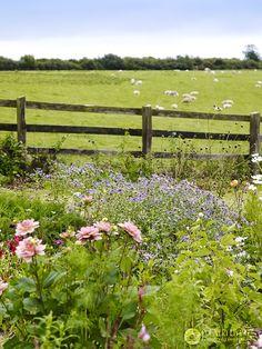 wildflowers and sheep