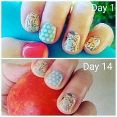 Another two weeks of perfect nails done. Not sure how I'm going to top this combo! Any suggestions?!?  #jamberrynailwraps #jamberryau #tealwhitepolkajn #sweetwhimsyjn #coralreefjn