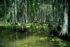 Louisiana Bayou | Grand Isle LA