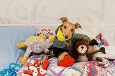 Think I have a lot of clothes? You should see my toys!! . Huge paws up to @CanadianTire for giving me all these new toys for xmas! I am sooo spoiled! My first and favourite toy was from Canadian Tire and these are even cuter! Big love to mums fav store  . #iggyjoey #cantire #pawsup#CanadianTire#CTlovespets#dogsoftoronto#torontodogs #dogsofcanada#toronto #torontolife#igerstoronto#igerscanada#torontopooches #the6ix #mydogrunsthe6ix ###yyz #torontolife #toronto_insta #torontoigers #the6ix…