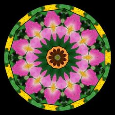 https://flic.kr/p/3cdzZ2 | Flower Kaleidoscope 1 | Kaleidoscope made with krazydad.com/makeyourown/index.php website
