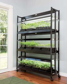 Aquaponics System, Aquaponique Diy, Garden Shelves, Tiered Garden, Hydroponic Gardening, Indoor Gardening, Indoor Farming, Aquaponics Greenhouse, Organic Gardening