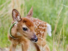 animales bambi - Buscar con Google