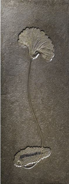 Seirocrinus subangularis