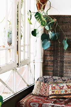green hanging plant in terra cotta pot. / sfgirlbybay