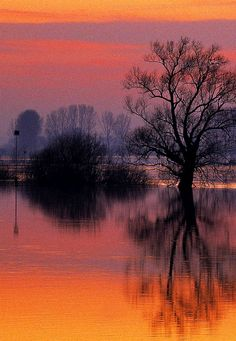 ✯ Flooded Street, Holland, beautiful quiet sunset, reflections of trees and light on the still water