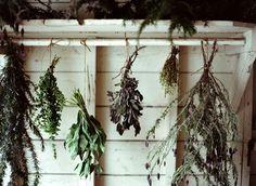 amy merrick: Drying herbs