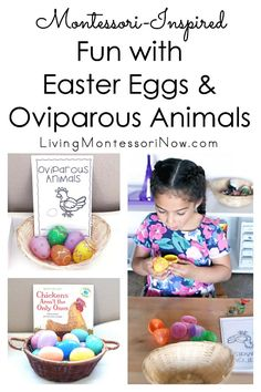 A fun way to introduce young children to oviparous animals (animals that lay eggs). Uses fillable Easter eggs and Safari Ltd. perfect for preschoolers and kindergartners at home or in the classroom - Living Montessori Now Preschool Eggs, Montessori Preschool, Homeschool Kindergarten, Preschool Science, Preschool Learning, Preschool Spanish, Teaching, Homeschooling, Easter Activities