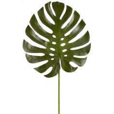 <div>Make a statement and decorate your home. Use this green monstera leaf stem as part of a bea...