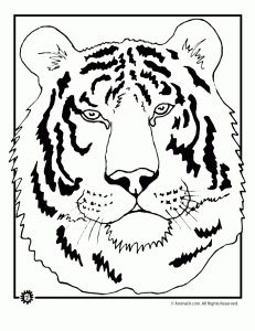 Tiger Coloring Pages, Animal Coloring Pages | Animal Jr.