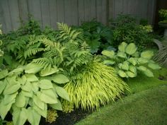 idea for mixing existing hosta and adding fern for area under river birch