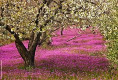 Close to Foloi village (municipality of Ancient Olympia), Ileia, Peloponnese, Greece; by Hercules Milas Olympia Greece, Eastern Countries, North Africa, Planet Earth, Four Seasons, Spring Time, Beautiful Places, Scenery, Around The Worlds