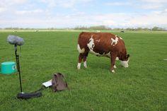 ...Auch die Tiere sind oft mittendrin statt nur dabei!
