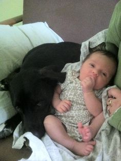 Babies With Dogs in the Family Get Sick Less Often
