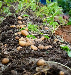 All Season Harvest – West Coast Seeds