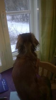 Kyösti is looking outside on my coffeetable..