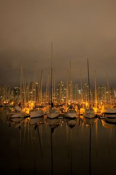 False creek at night, Vancouver (by Hansol Kim)